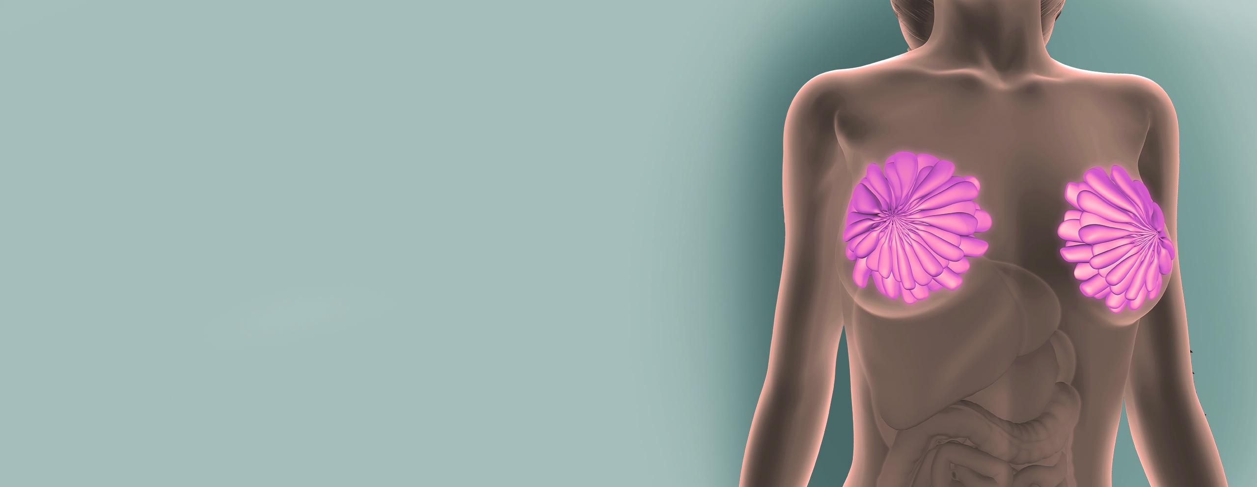 Kadın Hastalıkları ve Doğum Uzmanı Op. Dr. Lütfiye Tomak, meme kanseri ve hastalıklarının tespiti, erken tanı ve takip alanlarında uzman kadın sağlığı hizmetlerini sunmaktadır.